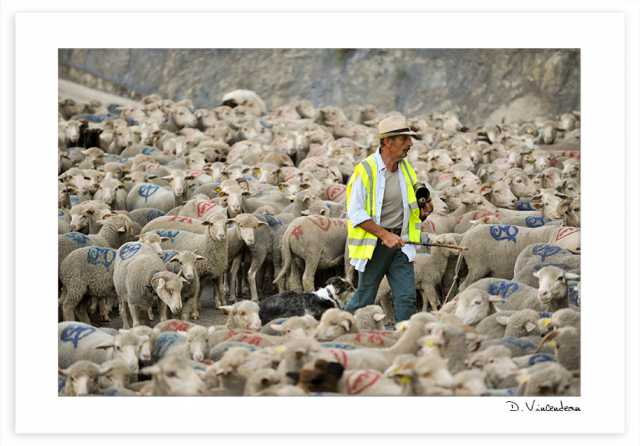 Transhumance - Guillaumes 2016